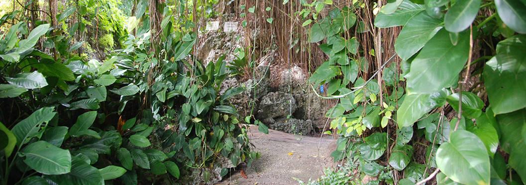 Andromeda Gardens - Foster Hall, Barbados