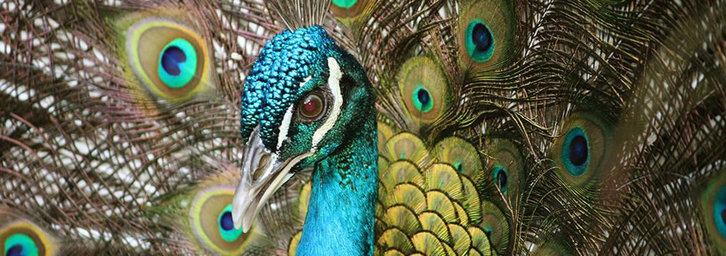 Barbados Wildlife Reserve, Barbados
