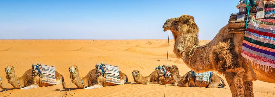 Camel Safari, Dubai