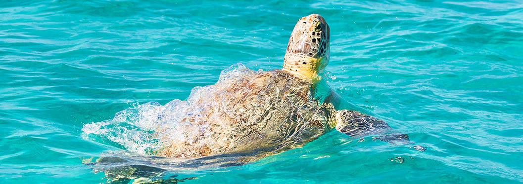 Turtle watching, Cape Verde