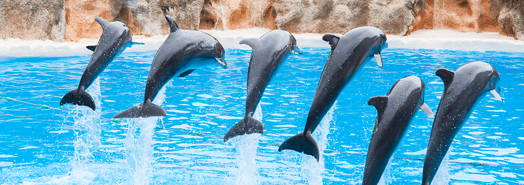 Dolphin World, Hurghada