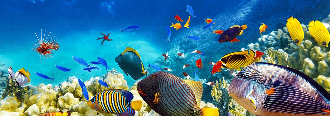 Hurghada Grand Aquarium, Hurghada