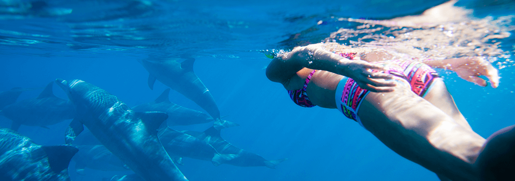 Swimming with wild dolphins, Hurghada