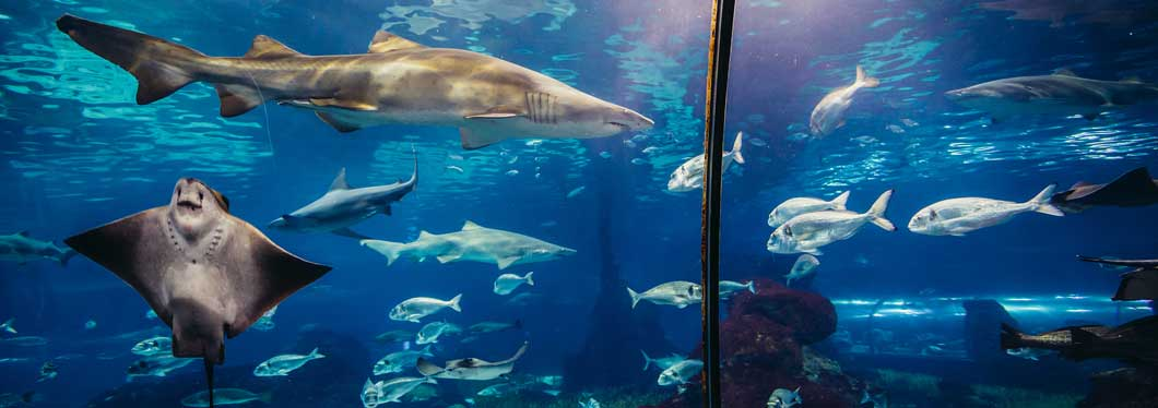 String rays and sharks in barcelona aquarium